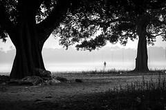 A MYSTIC MORNING (Arunabha Kundu) Tags: ngc travel people street candid dramatic ambiance trees stranger foggy dawn winter nikon india morningwalk