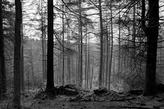 MaccForest (Tony Tooth) Tags: nikon d7100 sigma 1750mm forest trees bw blackandwhite monochrome silhouette cheshire woodland woods