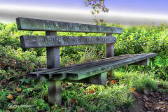 HDR bench (Fabke.be) Tags: nature natuur natural green fauna flore animals animal wildlife natuurpunt vlaanderen vlaams vlaamseardennen flower flowers bloemen dieren animaux flora inexplore explore flickrunitedaward coth5 naturephotography flickraward exposicion amazing colors canon7dii canon 7dmk2 lens camera photography canon175528 herfst autumn bos wood bois forest ronse oostvlaanderen belgië flandres flanders belgique erfgoed wandelwalhalla toerisme flandre hotond bench bank hdr