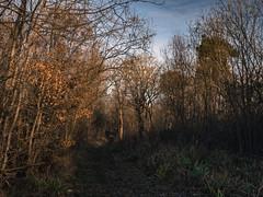 The Dying of the Light (davepickettphotographer) Tags: bramptonwoods cambridgeshire grafham water autumn leaves uk eastmidlands eastern england cold landscape photography woodland woods woodlands woodlandtrust