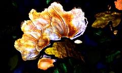 Glass Flower (pjpink) Tags: themet metropolitanmuseaumofart museum nyc newyork newyorkcity november 2018 ny fall pjpink 2catswithcameras