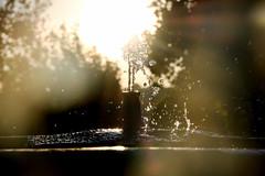 Splashing (Coquine!) Tags: christianleyk españa spain spanien andalusia cordoba garden garten alcazar moorish fountain springbrunnen water wasser sunset sonnenuntergang backlit gegenlicht spring splash drops tropfen dof bokeh