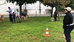 IMG_8525 (Doggy Puppins) Tags: educación canina adiestramiento canino perro dog