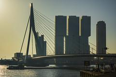 Netherlands - Rotterdam - Waterfront 03_DSC8896 (Darrell Godliman) Tags: netherlandsrotterdamwaterfront03dsc8896 officeformetropolitanarchitecture derotterdam skyscraper erasmusbridge erasmusbrug city cityscape rotterdam netherlands holland europe bridge oma