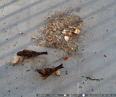 7PTDC0740 (Pep Companyó - Barraló) Tags: ocells pajaros aves aus ornitologia animals fauna natura puigreig bergueda barcelona catalunya josep companyo barralo