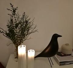 Candle light evening (Ingrid Friis Photo) Tags: candle ljus fågel bird stilleben stileben beutiful stearinljus kväll evening