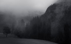 The Silence of the Woods (Netsrak) Tags: at alpen alps baum berg eu europa europe landschaft natur nebel wald fog landscape mist mountain nature woods bäume tree trees forest kleinwalsertal cloud clouds wolke wolken mono monochrome bw