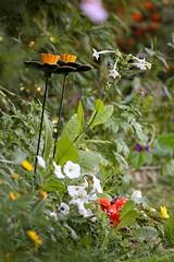 October Garden (haberlea) Tags: garden flowerbed mygarden flowers nature green