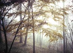 Dillard House Foggy Hillside (Neal3K) Tags: georgia northgeorgia dillardga landscape trees fall fog