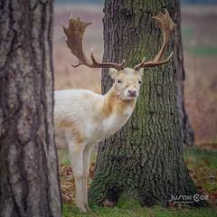 White deer watching me closely• • • • • #wildlife #deer #wildlifephotography #whitetail #deerhunting #buck #bowhunting #deerseason #archery #hunting #whitetaildeer #doe #hunt #wild #muledeer #elk #bigbuck #wildlife_perfection #animals #birds #safari #hunt (justin.photo.coe) Tags: ifttt instagram white deer watching me closely• • wildlife wildlifephotography whitetail deerhunting buck bowhunting deerseason archery hunting whitetaildeer doe hunt wild muledeer elk bigbuck wildlifeperfection animals birds safari huntingseason birdsofinstagram hunter bowhunter bowseason wildlifeseekers animal lumixg9