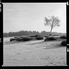 Bronica SQ-A-059-003 (michal kusz) Tags: pustynia kozłowska bronica sqa zenzanon 80mm ilford delta 400 ilfosol 3 desert poland tree sand bw blackandwhite film frame format squere sq heathers