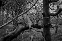 Arne 06-01-2019 07 (Matt_Rayner) Tags: arne monochrome trees