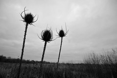 Gloomy Sunday Afternoon (jeangrgoire_marin) Tags: dark cloudy gloomy winter weather sad monochrome flat flatness sharp sharpness