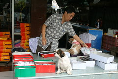 getting ready for business (the foreign photographer - ฝรั่งถ่) Tags: man sock merchant vendor seller shop phahoyolthin road sapan mai bangkhen bangkok thailand canon