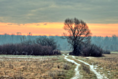 On the cold winter morning (malioli) Tags: tree canon snow sunrise sky clouds