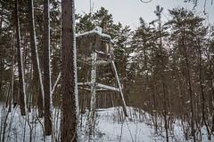 IMG_8786_edit (SPihtelev) Tags: ладога ленинградская область эхо войны берег ладоги озеро зима ladoga