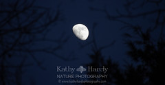 I see the Moon! (Kathy@dornickdesigns) Tags: kathyhardyphotography moon myhandmadelife winter2019 ouryard