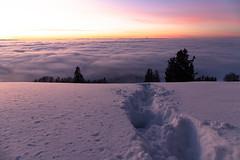 Afterglow (Hegglin Dani) Tags: zug zugerberg switzerland schweiz sunset sonnenuntergang abendrot schnee snow afterglow