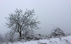 Winter tree (Creativespirit13) Tags: winter snow blackandwhite snowlandscape trees balkan mountains bulgaria staraplanina balkanmountains