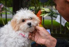 (M J Adamson) Tags: memorial mosqueshooting christchurchmosqueshooting christchurchmosqueterrorattacks christchurch canterbury nz newzealand dogs cute