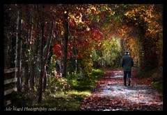 Forever autumn (awardphotography73) Tags: seasons autumnal forestfarm wales cardiff scenery nikon500 photographing outdoors colourful leaves autumn walk