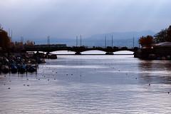 Quaibrücke (Weingarten) Tags: schweiz suisse svizzera switzerland zürich zurich zurigo limmat quaibrücke brücke bridge pont ponte