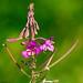 Floraison estivale