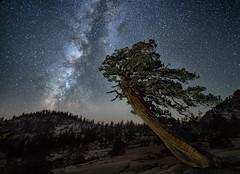 Here and Beyond (alicecahill) Tags: starryskies california workshop milkyway ©alicecahill olmstedpoint yosemitenationalpark nationalpark tree sky yosemite stars night usa ca
