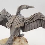 Great Cormorant thumbnail