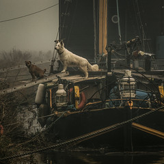 stand off (stocks photography.) Tags: michaelmarsh sandwich photographer photography bargelife standoff barge barges river atmospheric cinematic dog dogs appicoftheweek