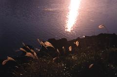 .changing waters. (Camila Guerreiro) Tags: film expiredfilm fuji pentaxmesuper jeju island camilaguerreiro analog fujichrome astia100 expired southkorea grain