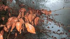 (farmspeedracer) Tags: nature fog mist herbst autumn fall lake tree leaf leaves brown 2016 november flash flashlight blitzlicht blitz cold park scary