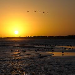 Sunset flyers (mountainmik) Tags: sunset beach birds flying sky waves sand