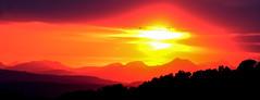Sunset flight (xDigital-Dreamsx) Tags: naturephotography landscape wildlife highlands sunset sundown dusk silhouettes red golden coth5