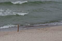 Kurshskaja_Kosa_Baltika_2011_06a_13 (Бесплатный фотобанк) Tags: balticsea coast curonianspit kaliningradregion landscape nature russia wave калининградскаяобласть куршскаякоса балтийскоеморе берег волны пейзаж природа россия море