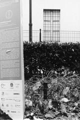 Streetscape 2018 (sirio174 (anche su Lomography)) Tags: streetscape streetart arte artedistrada como italia italy manifestazionepubblica street