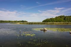 166-1 (Andre56154) Tags: schweden sweden sverige wasser water see lake landschaft landscape ufer