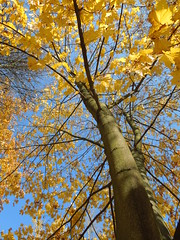 tree (cloversun19) Tags: rain animal field grass landscape branches leafs foliage sky russia russian spb tree walking country holiday holidays park garden dream dreams positive forest happy view grey legend fairytale fir firtree birch village evening romantic october september car road street blue maple leaves town city light sun yellow autumn trees