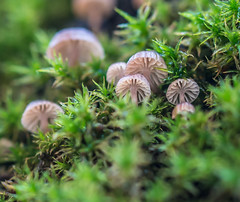 Macro,at work. (Omygodtom) Tags: macro bokeh dof tamron tamron90mm texture natural nature mushrooms fungus moss digital season stumpy usgs urbunnature