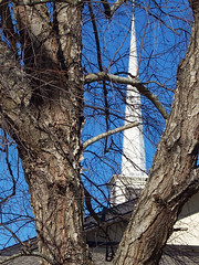 Church Steeple Through Tree Branches. (dccradio) Tags: lumberton nc northcarolina robesoncounty outdoor outdoors outside january winter weekend sunday sundayafternoon afternoon goodafternoon kodak easyshare dx4530 nature natural tree trees branch branches treebranch treebranches treelimb treelimbs mormon mormonchurch churchbuilding religious lds churchofjesuschristoflatterdaysaints steeple spire sky bluesky clearskies