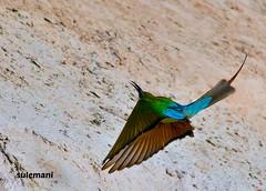 2E6A6989a (TARIQ HAMEED SULEMANI) Tags: sulemani tariq tourism trekking tariqhameedsulemani winter wildlife wild birds nature nikon