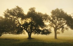 Fog in the Texas Hill country (Cooke Photo) Tags: serene trees fog sunrise