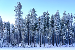 (patrickgkelly) Tags: trees frosty cold snow winter forest blue landscape brrr