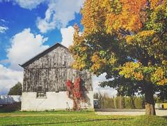 Bright and beautiful barn (jessalynn_sammons) Tags: iphone colourful fall barn autumn