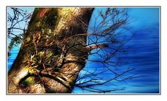 Der Ast geht, der Baum bleibt - The branch goes, the tree remains - La rama va, el árbol permanece - O ramo vai, a árvore permanece - La branche s'en va, l'arbre reste (Pixxelformer) Tags: panasonic dmcg6 ƒ50 530 mm 11300 160 baum ast sprichwort leben natur vergehen vergeht zeit heilt wunden