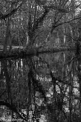 IMGP9337 (Brian H Whittle) Tags: blackwhite leedsliverpoolcanal rufford canal