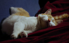IMGP6727 (PahaKoz) Tags: животное питомец кот котейка котэ спит рыжий портрет animal pet cat tomcat sleep sleeping sleeps red portrait