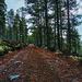 Skogsbilveg i Kvernesvola i Rendalen