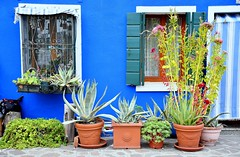 So simple yet so beautiful - a house front in Burano Island (One more shot Rog) Tags: venice murano burano italy colour houses canal canals reflections onemoreshotrog buranoisland ferry boats boat windows decor decorative pots
