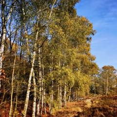 a nice autumn dat 🍂🍄🍁 (Jos Mecklenfeld) Tags: netherlands drenthe exloo molenveld natuur nature heath heide autumn herfst hipstamatic